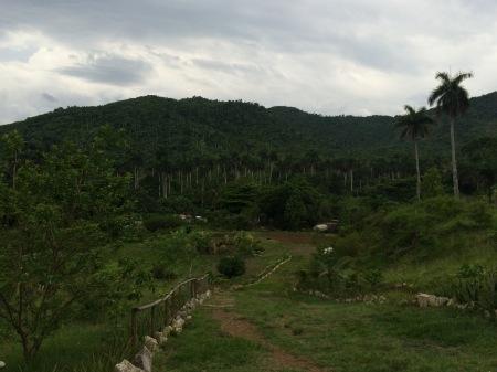 Eloisa's Medicinal Farm