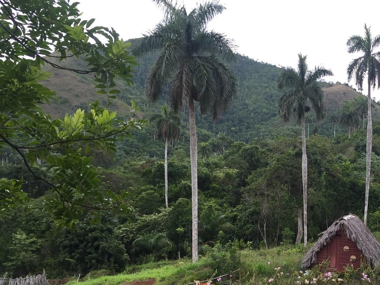 Organic medicinal farm in Soroa, Cuba